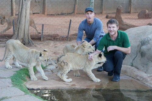 Wrestling with the lion cubs outside Johannesburg, South Africa.