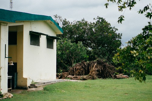 Fallen-Tree-at-Orphanage